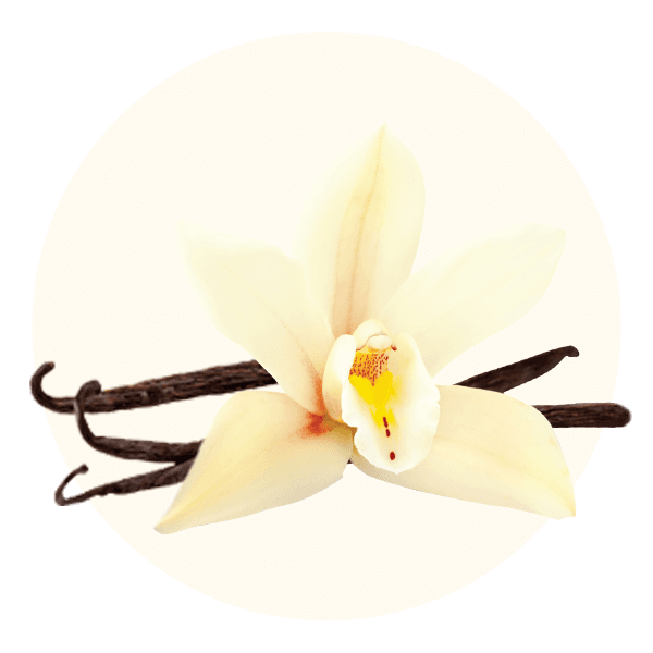 Custard Vanilla