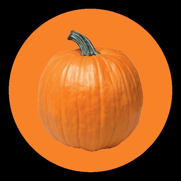 Hand Scooped Pumpkin Spice