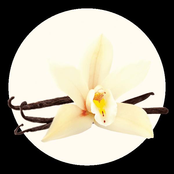 Hand Scooped Vanilla